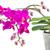 violeta · orquídeas · brilhante · beleza · verão - foto stock © neirfy