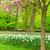 fű · gyep · nárciszok · tavasz · kert · zöld · fű - stock fotó © neirfy