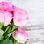 rosa · fresco · rosas · branco - foto stock © neirfy