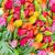 prado · flores · vermelhas · mães · dia · branco · cinza - foto stock © neirfy
