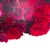 frontière · roses · rouges · rouge · rose · roses · isolé - photo stock © neirfy