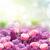 orgona · rózsa · virágok · keret · lila · rózsaszín - stock fotó © neirfy