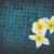 fehér · virág · tele · virágzik · természet · terv - stock fotó © neirfy