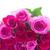buquê · fresco · rosa · rosas · magenta · fronteira - foto stock © neirfy