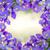 blu · fiori · isolato · bianco · fiore - foto d'archivio © neirfy