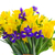 spring narcissus tulips and irises stock photo © neirfy