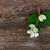 tea · teáskanna · ág · fa · asztal · virág · étel - stock fotó © neirfy