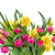 bunch of pink tulips and yellow daffodils stock photo © neirfy