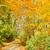 modo · autunno · parco · colore · foresta · natura - foto d'archivio © neirfy