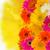 grens · bloemen · roze · geïsoleerd · witte · natuur - stockfoto © neirfy