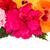 розовый · лист · гибискуса · изолированный · белый · снежинка - Сток-фото © neirfy