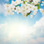 blossoming plum flowers on sky background stock photo © neirfy