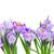 bahar · çiçekleri · yalıtılmış · beyaz · Paskalya · çiçekler - stok fotoğraf © neirfy