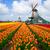 nederlands · windmolen · tulpen · veld · kanaal · groeiend - stockfoto © neirfy