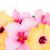 границе · красочный · гибискуса · цветы · розовый · свежие - Сток-фото © neirfy
