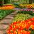pedra · caminho · jardim · flor · da · primavera · florescimento · tulipa - foto stock © neirfy