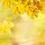 vallen · bladeren · gazon · gras · park · esdoorn - stockfoto © neirfy