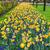 tulipánok · Amszterdam · színes · csatorna · Hollandia · tavasz - stock fotó © neirfy