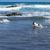 plaj · tenerife · ada · İspanya · manzara - stok fotoğraf © neirfy