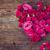 中心 · ピンク · 蘭 · 孤立した · 白 · 春 - ストックフォト © neirfy