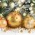 evergreen · albero · decorazioni · fresche · Natale - foto d'archivio © neirfy
