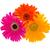 fiori · parecchi · colorato · rugiada · gocce · isolato - foto d'archivio © neirfy