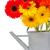 границе · цветы · изолированный · белый · красоту · Daisy - Сток-фото © neirfy