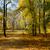 bank · najaar · park · landschap · hout · tuin - stockfoto © neirfy