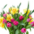 bunch of tulips and daffodils in vase stock photo © neirfy