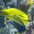 óriás · trópusi · Vörös-tenger · hal · tájkép · tenger - stock fotó © neirfy
