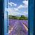 ラベンダー畑 · 収穫 · 空 · 花 · 日没 · 風景 - ストックフォト © neirfy