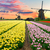 holland · szélmalom · tulipánok · mező · csatorna · növekvő - stock fotó © neirfy