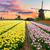 области · Purple · тюльпаны · ветровой · турбины · Нидерланды · небе - Сток-фото © neirfy