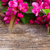 cherry flowers on wood stock photo © neirfy