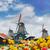 тюльпаны · Windmill · традиционный · голландский · красочный · области - Сток-фото © neirfy