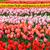 красочный · кровать · розовый · цветы · оранжевый - Сток-фото © neirfy