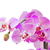 pembe · orkide · şube · yalıtılmış · beyaz · bahçe - stok fotoğraf © neirfy