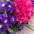 фиолетовый · Iris · цветок · лепестков · красивой - Сток-фото © neirfy