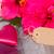 iki · pembe · ebegümeci · çiçekler · yaprakları · yalıtılmış - stok fotoğraf © neirfy