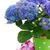 цветы · банка · шкатулке · изолированный · белый · цветок - Сток-фото © neirfy