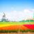 dutch windmills over flower fields stock photo © neirfy