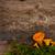 mushrooms on wooden background stock photo © neirfy