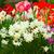 çiçek · aile · dil · çiçekler · güzellik · gurur - stok fotoğraf © neirfy