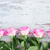 rosa · fresco · rosas · fronteira · branco - foto stock © neirfy