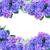 границе · синий · цветы · изолированный · белый · цветок - Сток-фото © neirfy