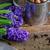 庭園 · ツール · 暗い · 春 · ここで · 花 - ストックフォト © neirfy