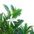 mandarijn · boom · grens · witte · natuur - stockfoto © neirfy
