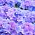 kék · közelkép · levelek · növény · virágcsokor - stock fotó © neirfy