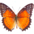 red lacewing butterfly stock photo © neirfy