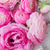 pink and white ranunculus flowers stock photo © neirfy